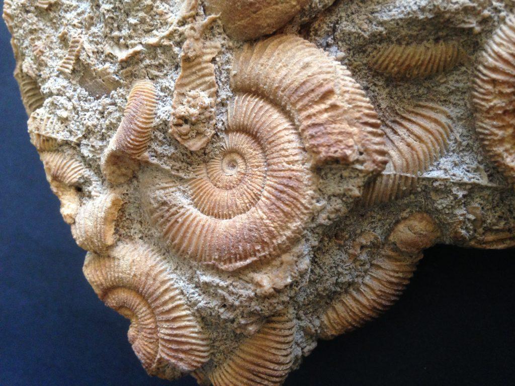 afb Fossiel slakkengroep detail