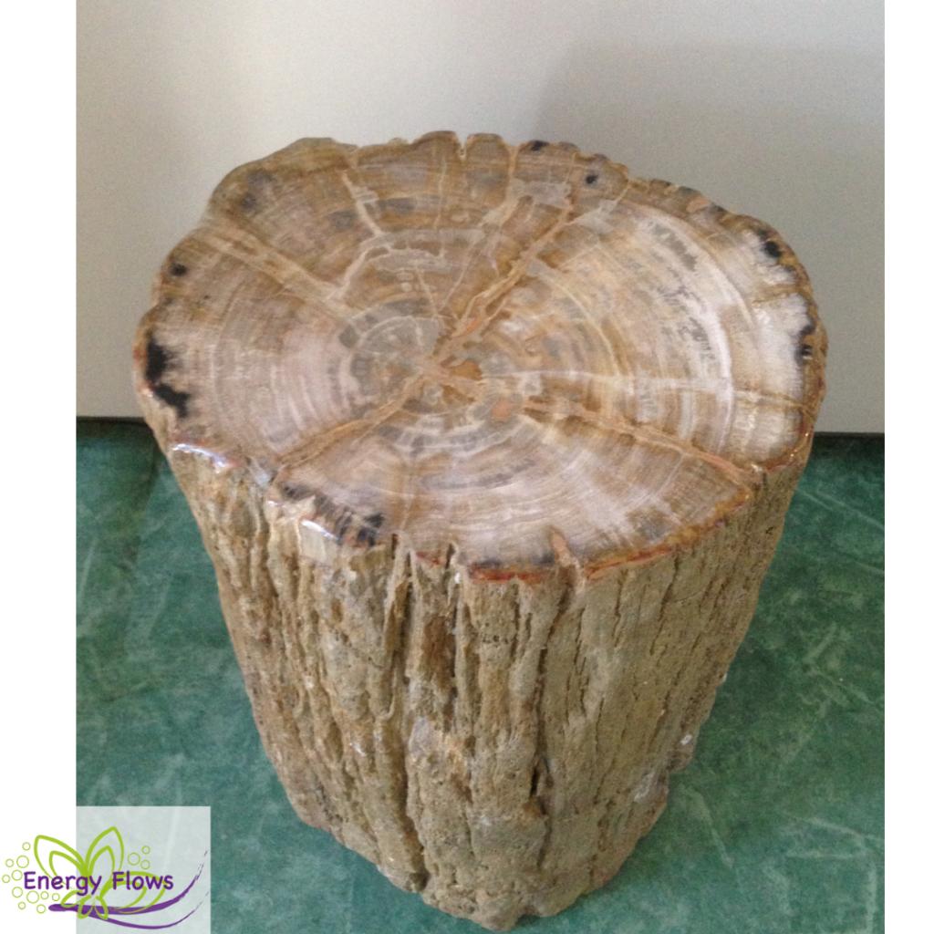 afb Versteend hout 'bijzettafel' stam - Indonesie